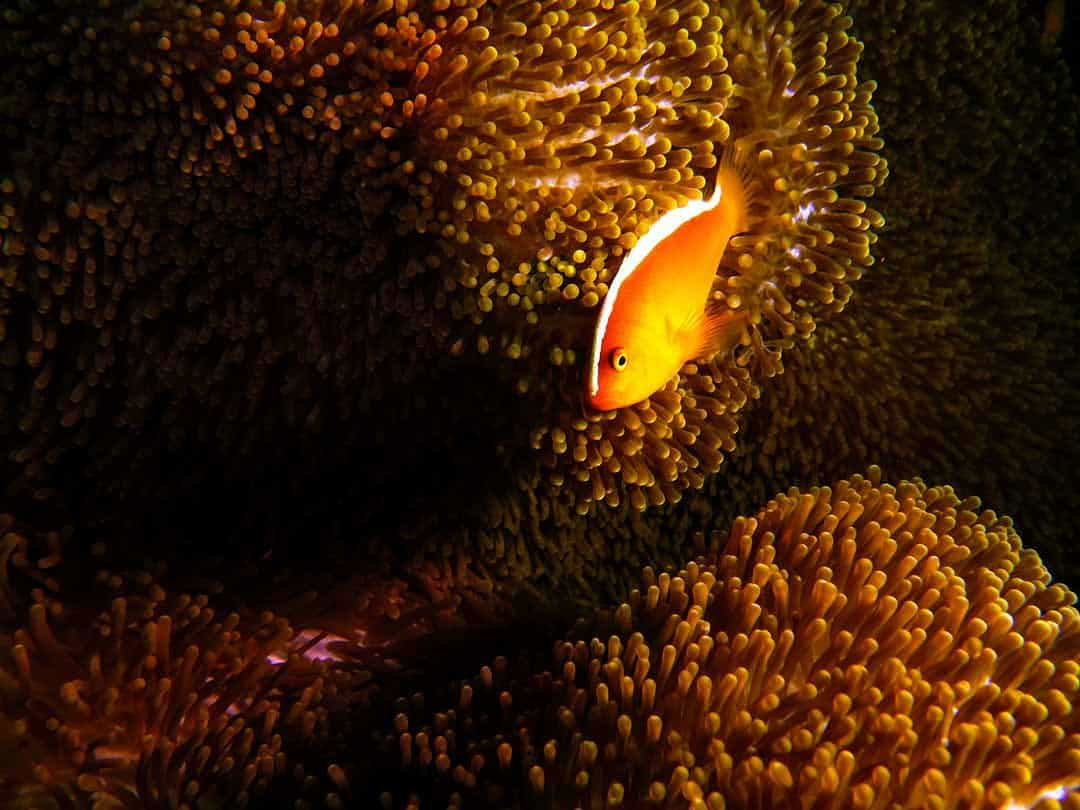 best diving in palawan