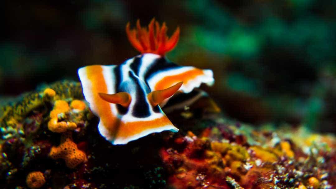 philippine scuba diving