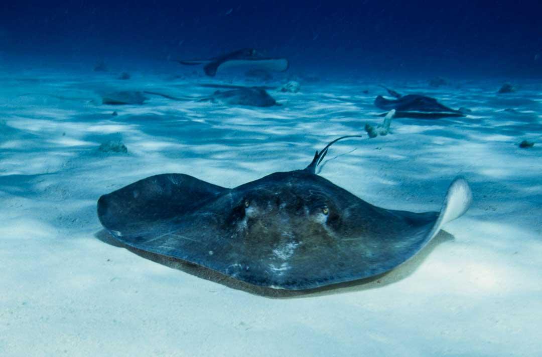 best shore snorkeling caribbean