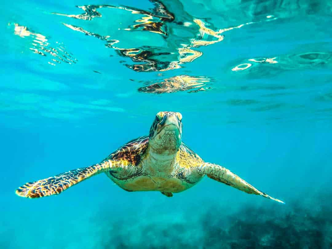 best snorkeling in caribbean