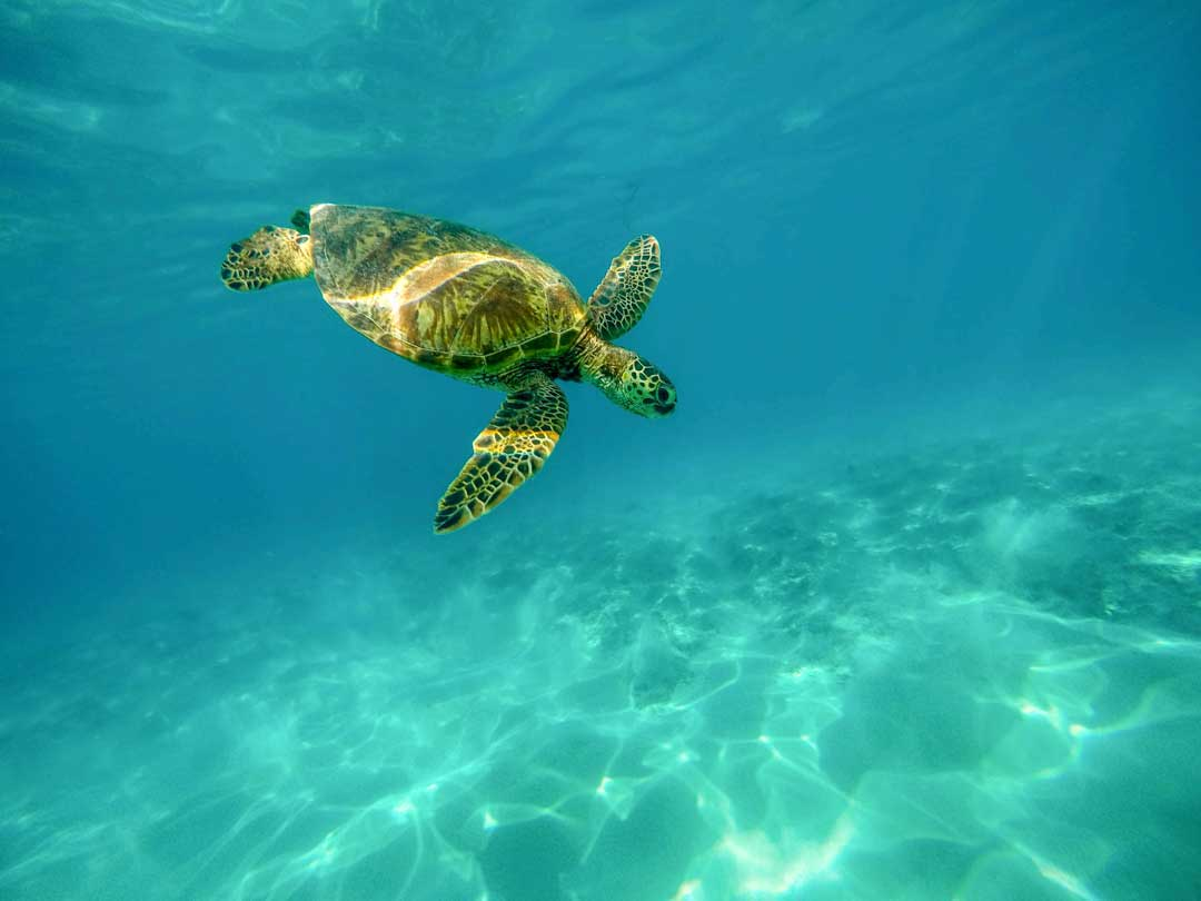 best snorkeling caribbean islands