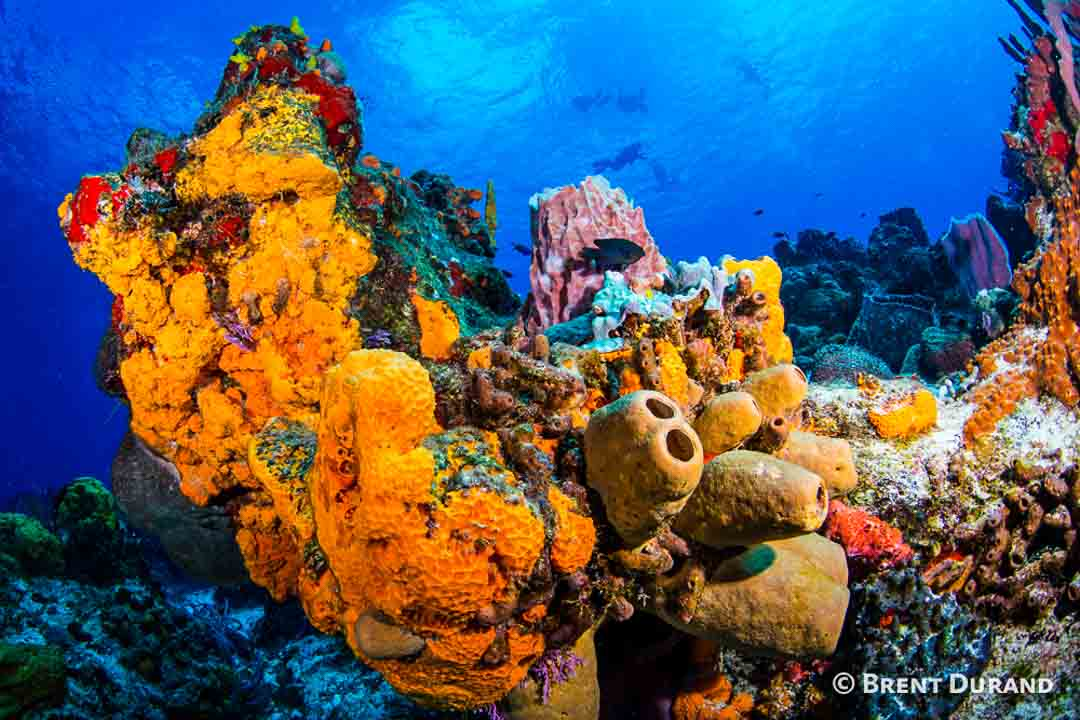 plancar reef