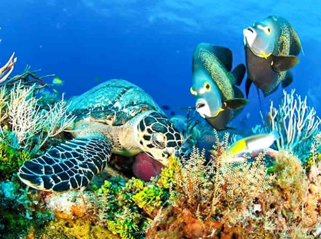 best cozumel snorkeling