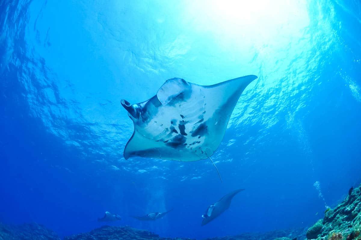 shore diving in kauai
