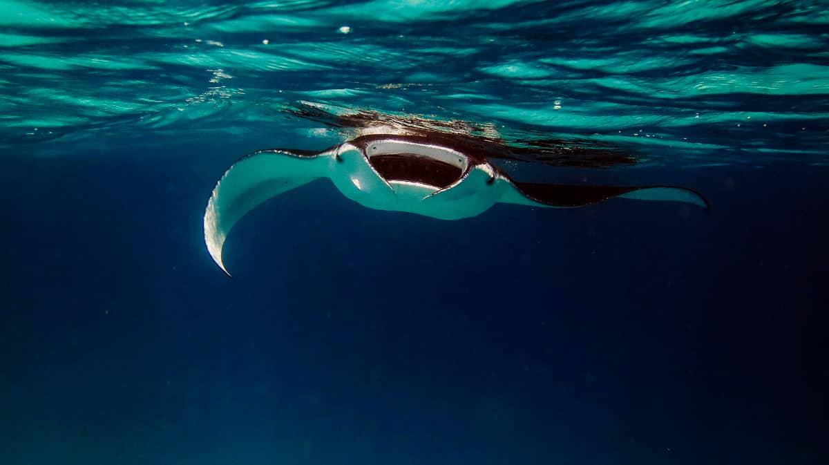 fathom five diving kauai