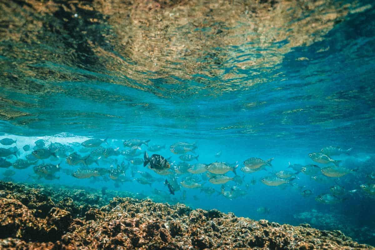 kauai dive