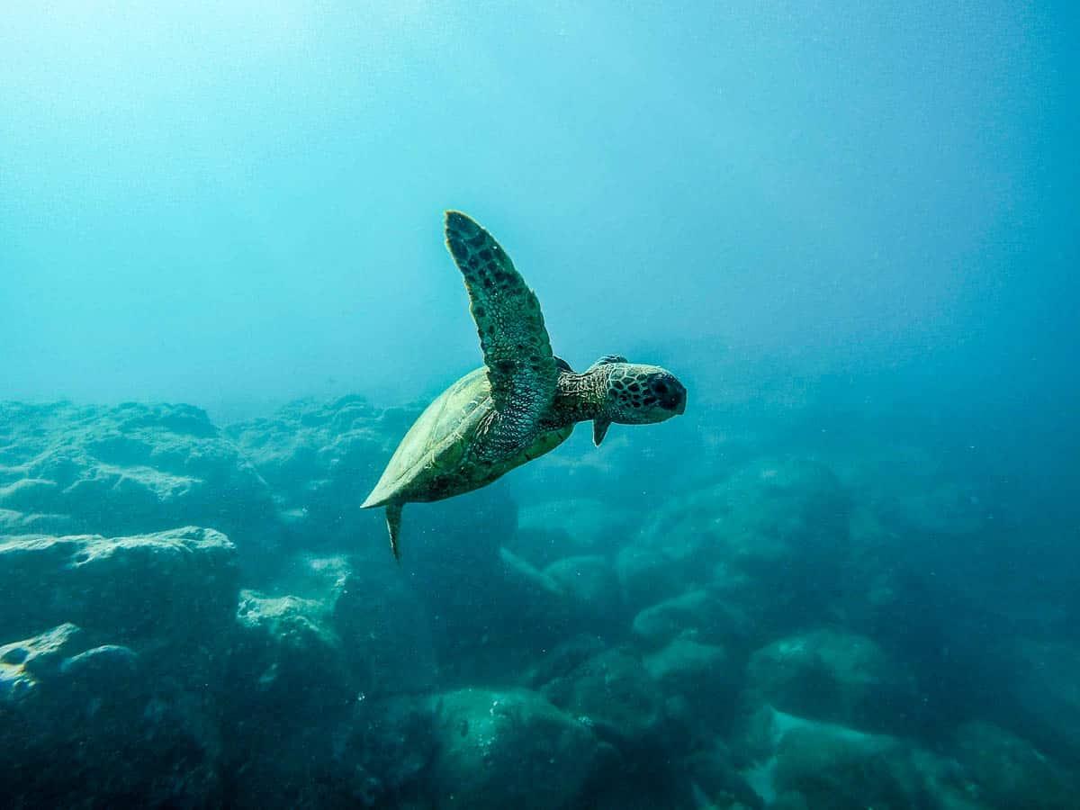 kauai shore diving
