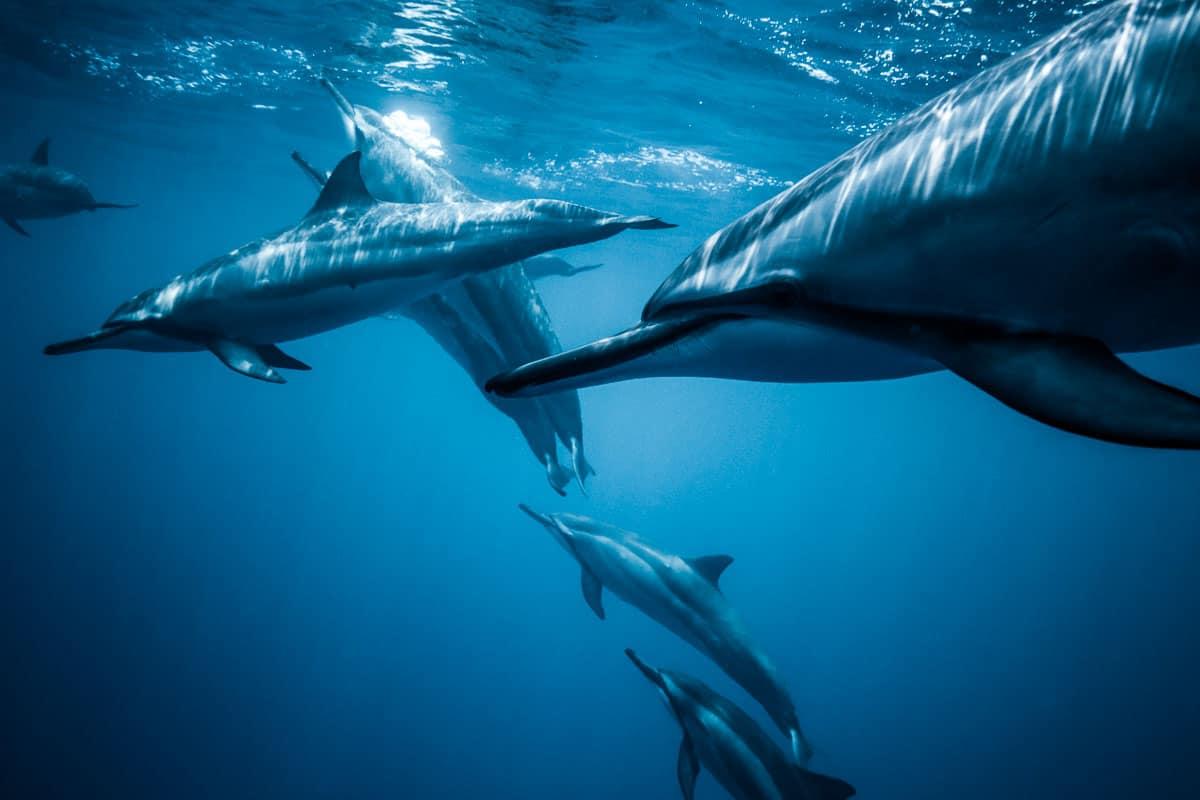 best scuba diving spots in hawaii