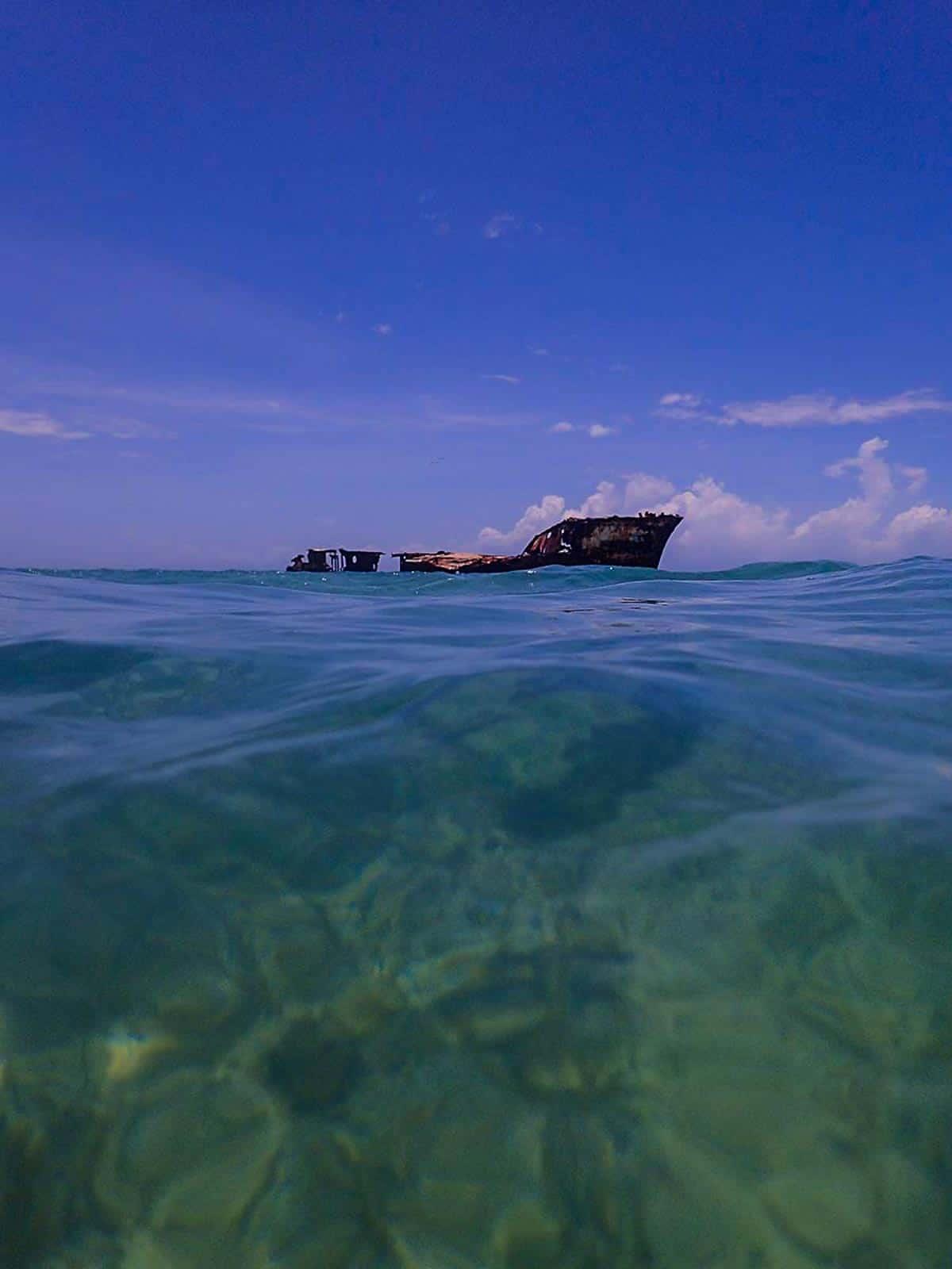 aruba coral reef