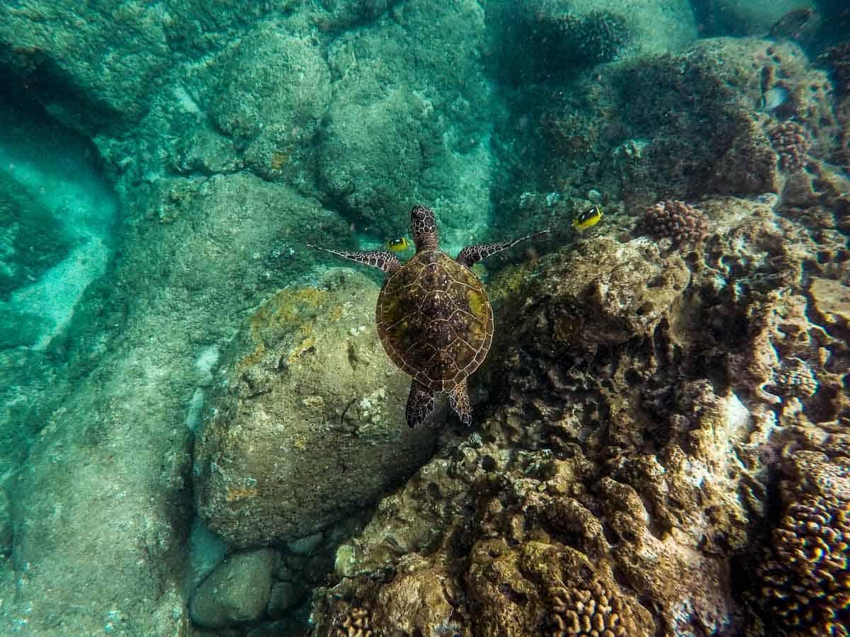 belize snorkeling ambergris caye