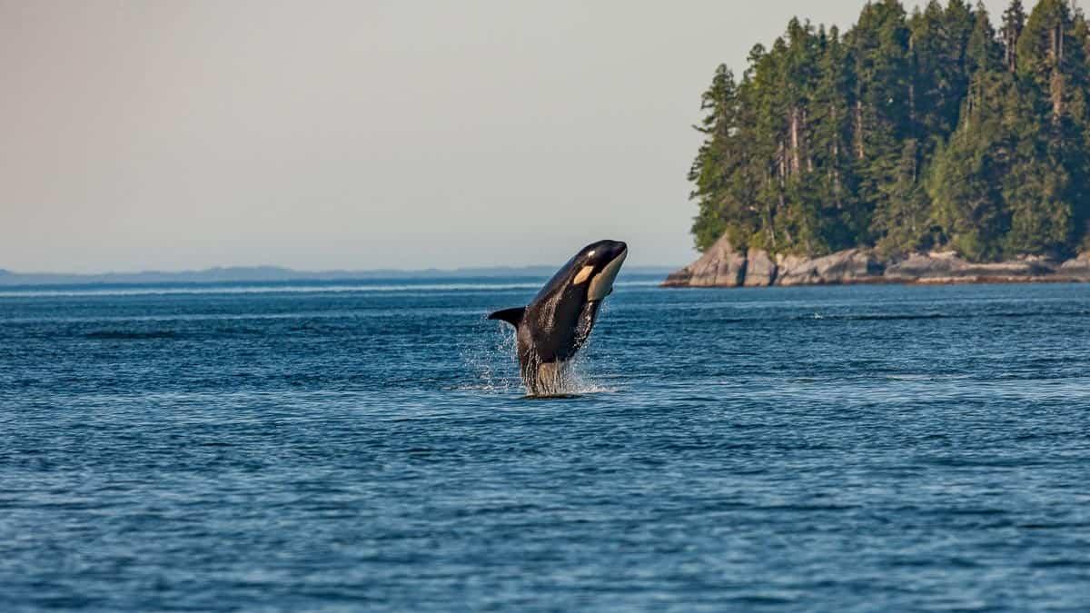 predation in the ocean