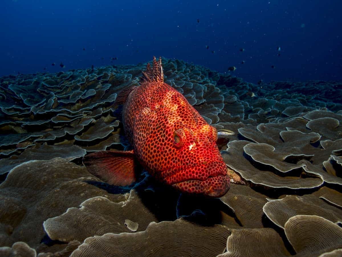 snorkeling sets reviews