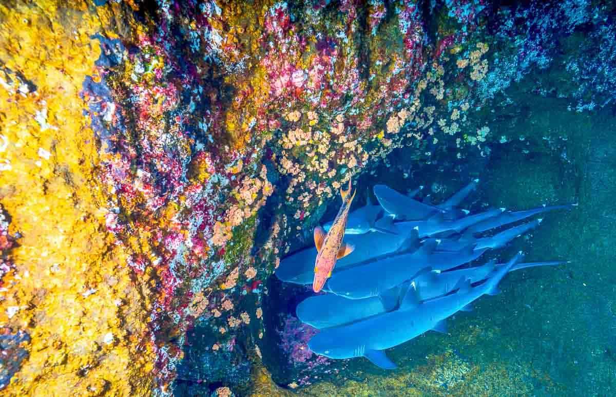 diving florida