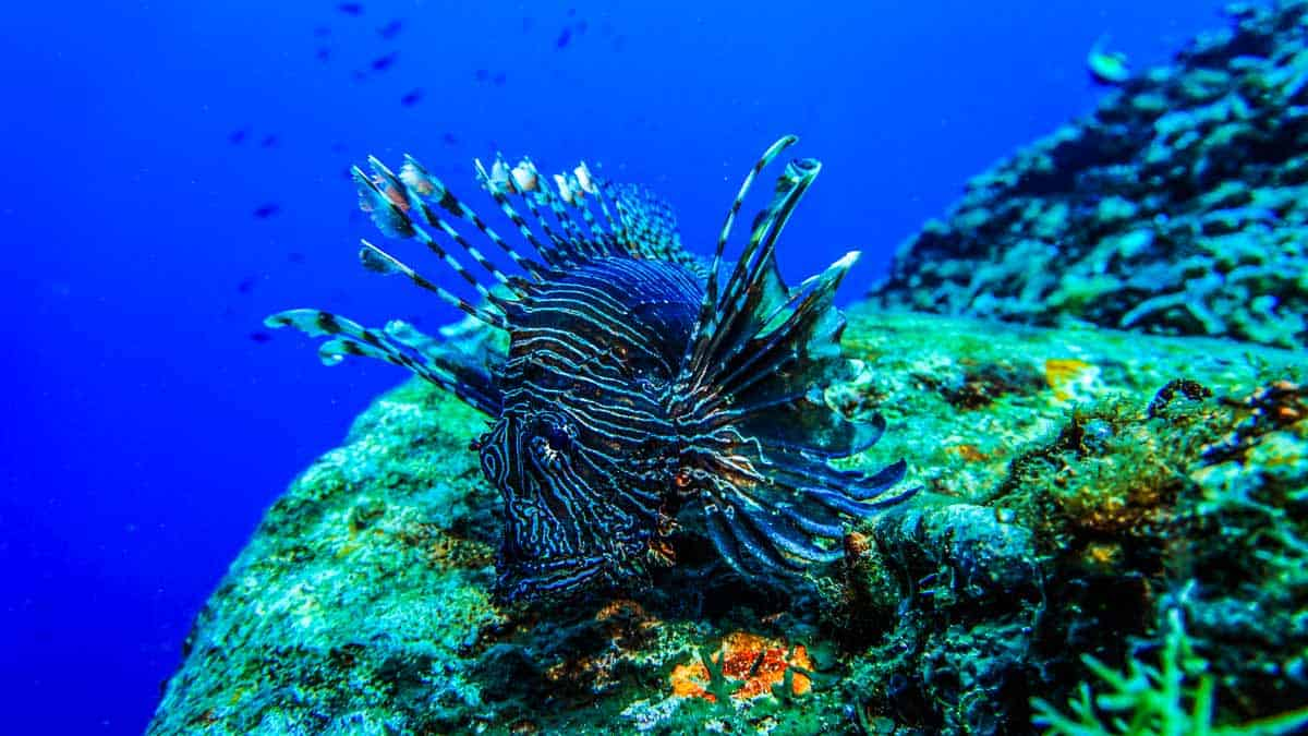 best islands for snorkeling