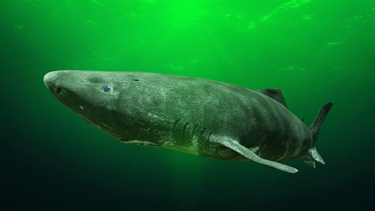 rarest sharks