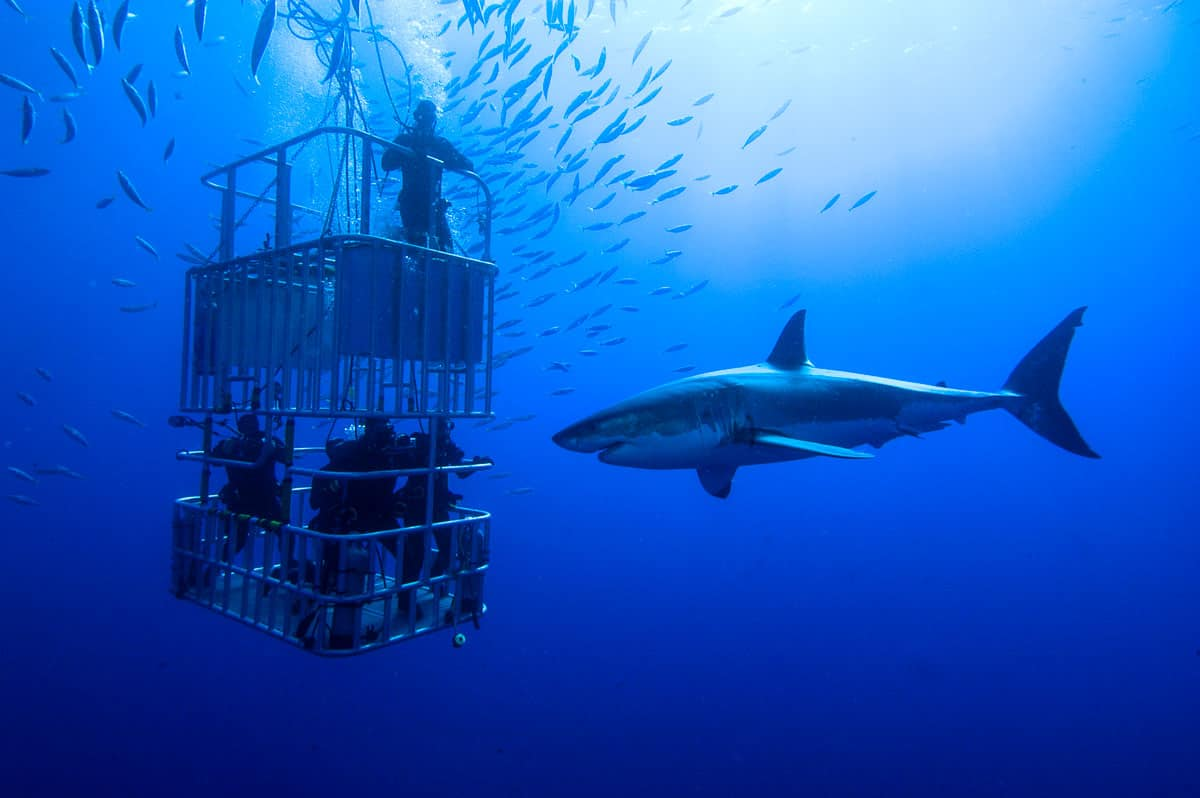 EXPERT GUIDE TO THE MOST INTERESTING SHARKS ON THE PLANET