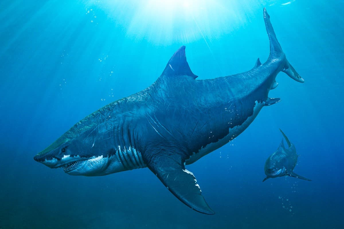 coolest facts about sharks