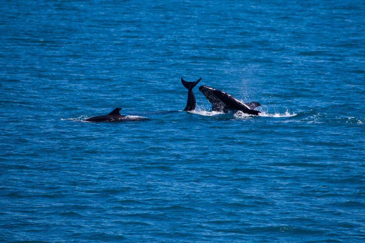 ocean animals
