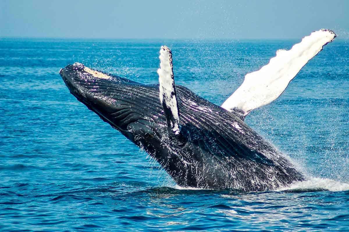 interesting marine mammals