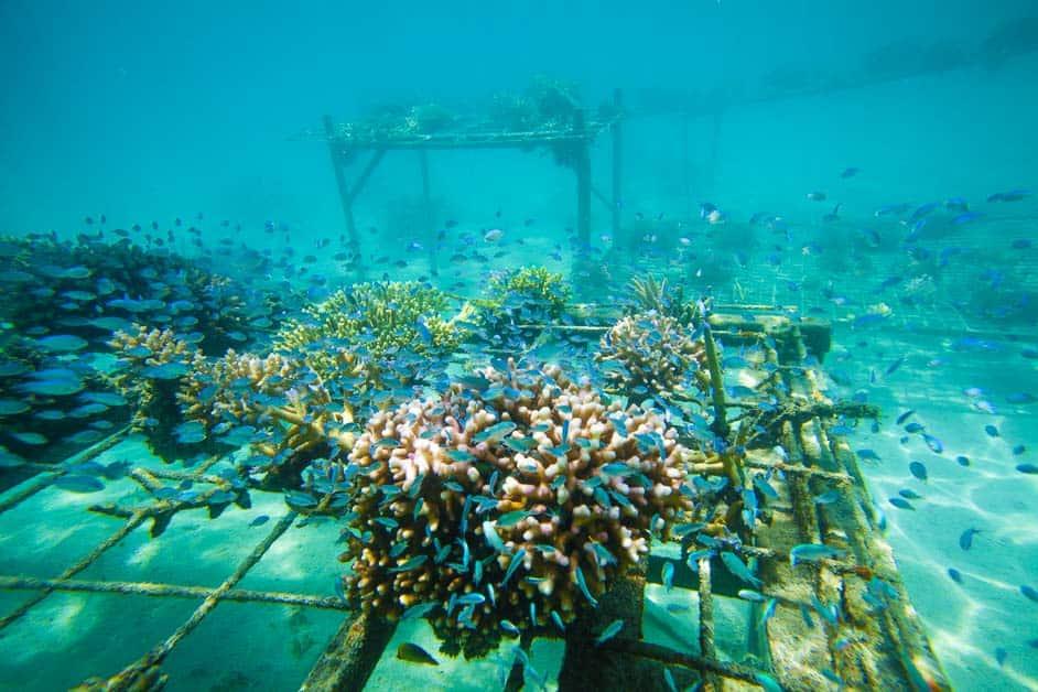 coral farms