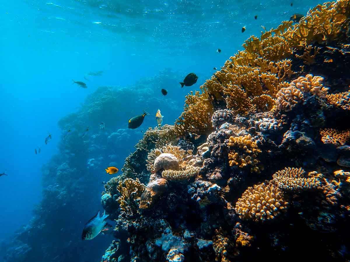 organic corals underwater