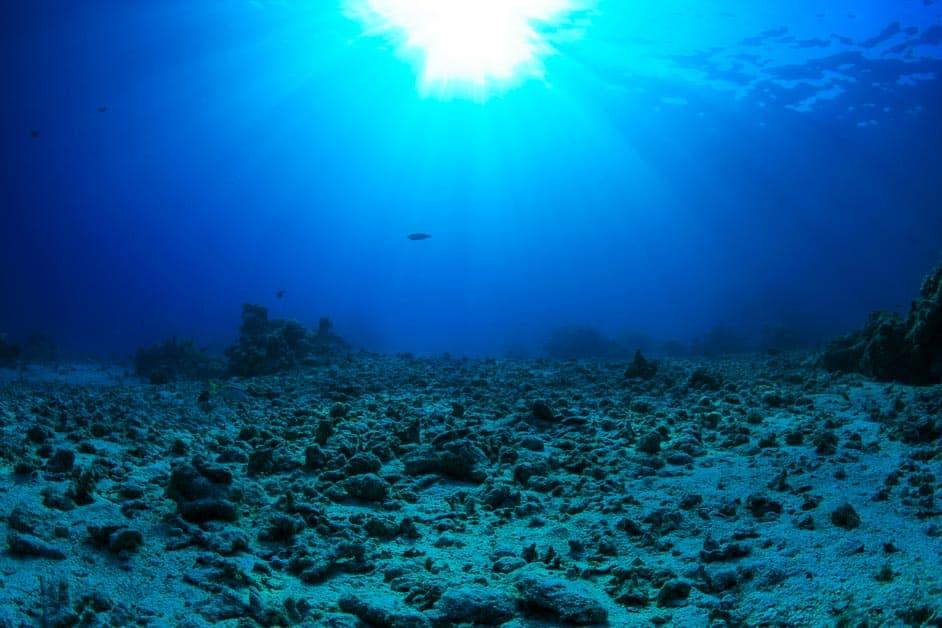 barren coral reefs