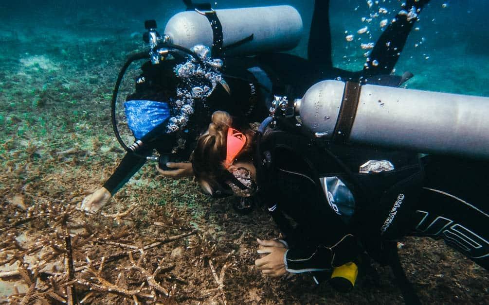 scuba divers farming coral
