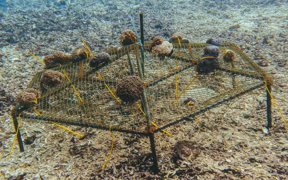 tampico coral farms