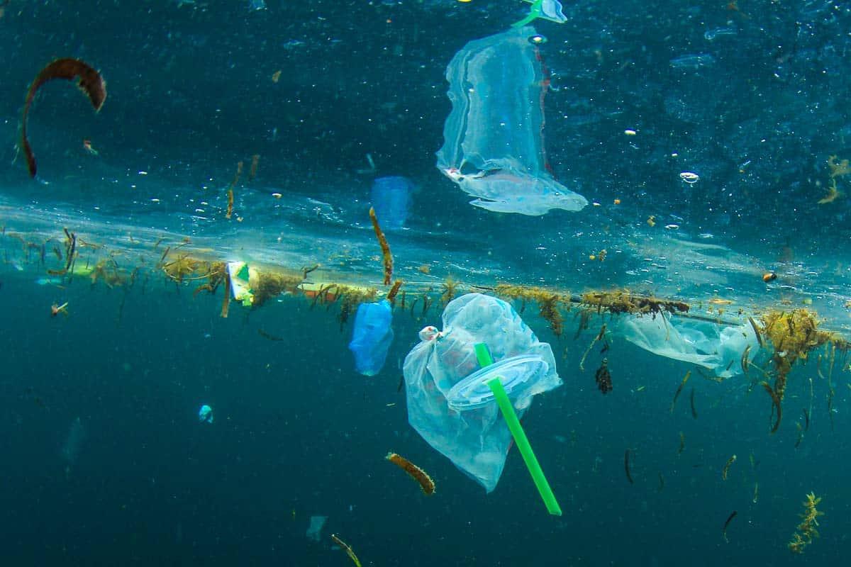 plastic straws ban
