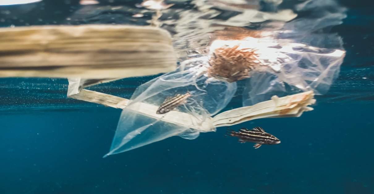 plastic killing marine life