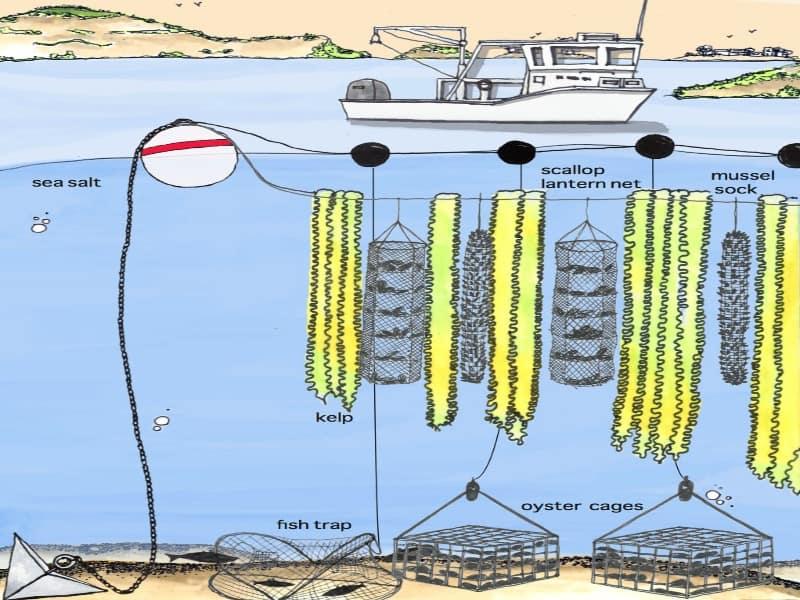 3D kelp farming