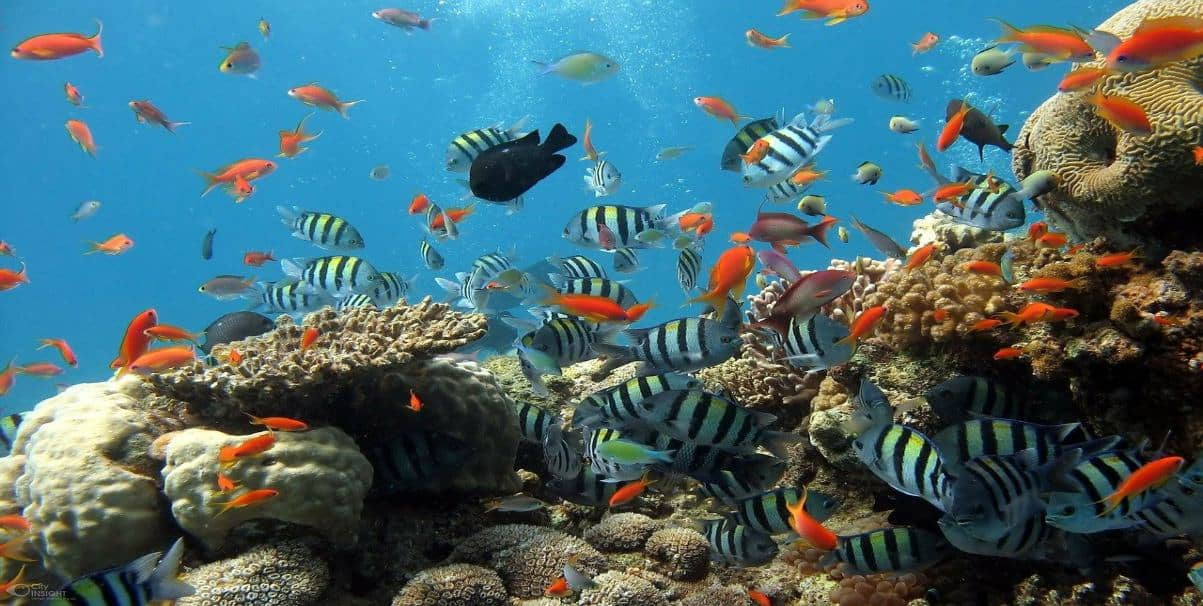 rich biodiversity of fish on coral reefs