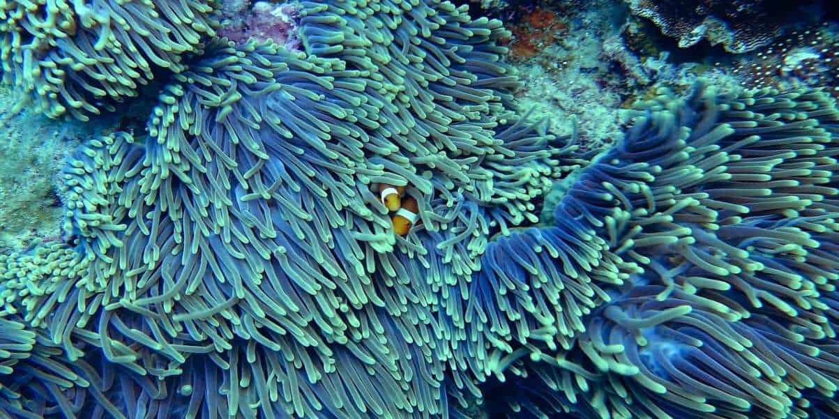 beautiful coral reef with fish